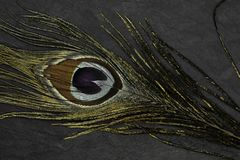 Χρυσό φτερό peacock στο μαύρο υπόβαθρο πετρών στοκ φωτογραφίες με δικαίωμα ελεύθερης χρήσης