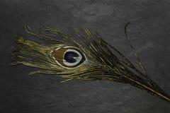 Χρυσό φτερό peacock στο μαύρο υπόβαθρο πετρών στοκ φωτογραφία με δικαίωμα ελεύθερης χρήσης