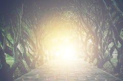 Χρυσό φως στο τέλος της σήραγγας των δέντρων - ελπίδα έννοιας στοκ φωτογραφίες με δικαίωμα ελεύθερης χρήσης