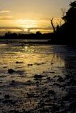 χρυσό φως Στοκ Εικόνα