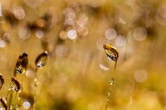 χρυσό φως Στοκ Εικόνες