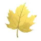 Χρυσό φύλλο σφενδάμου Στοκ Εικόνες