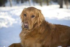 χρυσό χιόνι Στοκ εικόνα με δικαίωμα ελεύθερης χρήσης