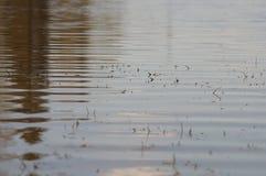 χρυσό ύδωρ επιφάνειας κυματώσεων Στοκ φωτογραφία με δικαίωμα ελεύθερης χρήσης