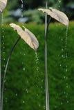 χρυσό ύδωρ φύλλων χαρακτηρ& Στοκ εικόνα με δικαίωμα ελεύθερης χρήσης