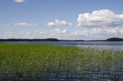 χρυσό ύδωρ επιφάνειας κυματώσεων Στοκ Εικόνα