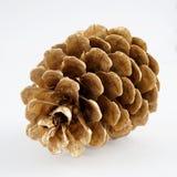 Χρυσό pinecone διακόσμηση Χριστουγέννων χρυσή η ανασκόπηση απομόνωσε το λευκό Στοκ Εικόνα