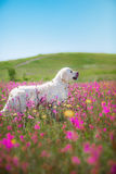 Χρυσό Retriever σκυλιών στα λουλούδια Στοκ Εικόνες