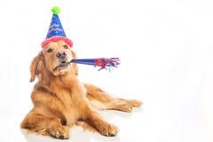χρυσό retriever σκυλιών στοκ φωτογραφία με δικαίωμα ελεύθερης χρήσης