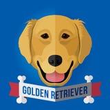 χρυσό retriever Στοκ Εικόνες