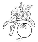 Χρωματίζοντας βιβλίο, δέντρο της Apple απεικόνιση αποθεμάτων