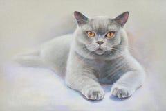 Χρωματίζοντας βρετανικό shorthair γατών Στοκ Φωτογραφίες
