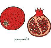 Χρωματίζοντας σελίδα φρούτων ροδιών Γραφικό διανυσματικό ζωηρόχρωμο doodle Στοκ Εικόνες