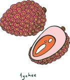 Χρωματίζοντας σελίδα φρούτων Lychee Γραφική διανυσματική ζωηρόχρωμη τέχνη φ doodle Στοκ φωτογραφία με δικαίωμα ελεύθερης χρήσης