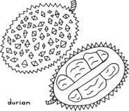 Χρωματίζοντας σελίδα Durian Γραφική διανυσματική γραπτή τέχνη για το συνταγματάρχη Στοκ Φωτογραφίες