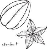 Χρωματίζοντας σελίδα Starfruit Γραφική διανυσματική γραπτή τέχνη για Στοκ εικόνες με δικαίωμα ελεύθερης χρήσης