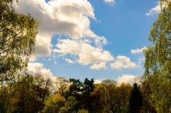 Χρωματισμένα άνοιξη δέντρα με μερικά σύννεφα σε έναν μπλε ουρανό Στοκ Εικόνες