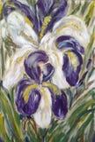 Χρωματισμένα άσπρα και ιώδη λουλούδια Fleur-de-Lis ελεύθερη απεικόνιση δικαιώματος