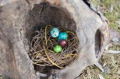 Χρωματισμένα αυγά ορτυκιών σε μια φωλιά σε ένα κοίλο δέντρο Εκλεκτική εστίαση Στοκ Εικόνες