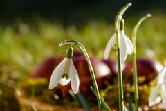 Χρωματισμένα αυγά Πάσχας στο φλοιό κρεμμυδιών στοκ εικόνες