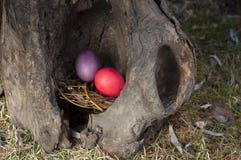 Χρωματισμένα αυγά σε μια φωλιά σε ένα κοίλο δέντρο Εκλεκτική εστίαση Στοκ Εικόνες