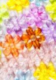 Χρωματισμένα διαφανή λουλούδια γυαλιού Στοκ Φωτογραφία