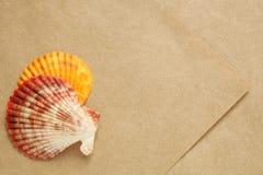 Χρωματισμένα θαλασσινά κοχύλια που παρουσιάζονται στο φύλλο του κατασκευασμένου εγγράφου Στοκ φωτογραφίες με δικαίωμα ελεύθερης χρήσης
