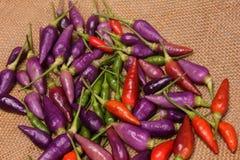 Χρωματισμένα καυτά πιπέρια Στοκ Φωτογραφία