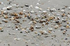 Χρωματισμένα κοχύλια θάλασσας στη χρυσή άμμο παραλιών κοντά στο θαλάσσιο νερό, clos Στοκ φωτογραφία με δικαίωμα ελεύθερης χρήσης