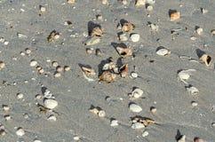 Χρωματισμένα κοχύλια θάλασσας στη χρυσή άμμο παραλιών κοντά στο θαλάσσιο νερό, Στοκ φωτογραφία με δικαίωμα ελεύθερης χρήσης