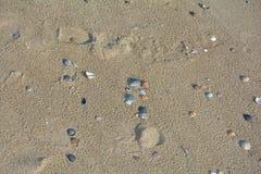 Χρωματισμένα κοχύλια στην παραλία άμμου Στοκ εικόνα με δικαίωμα ελεύθερης χρήσης