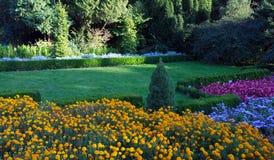 χρωματισμένα λουλούδια Στοκ φωτογραφία με δικαίωμα ελεύθερης χρήσης