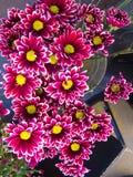 χρωματισμένα λουλούδια &p Στοκ Φωτογραφίες