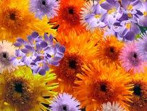 χρωματισμένα λουλούδια &p Στοκ εικόνες με δικαίωμα ελεύθερης χρήσης
