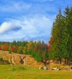 Χρωματισμένα ξύλα φθινοπώρου και ηλιόλουστο λιβάδι Στοκ εικόνες με δικαίωμα ελεύθερης χρήσης