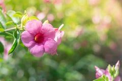 Χρωματισμένα λουλούδια και φυσικός φωτισμός Στοκ Φωτογραφία