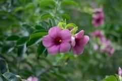 Χρωματισμένα λουλούδια και φυσικός φωτισμός Στοκ Εικόνες