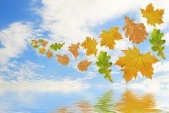 χρωματισμένα πετώντας φύλλα πολυ Στοκ Εικόνες