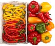 χρωματισμένα πιπέρια Στοκ Φωτογραφία