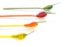 χρωματισμένα πολυ πιπέρια Στοκ Εικόνες