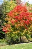 Χρωματισμένα πτώση δέντρα Στοκ Φωτογραφία