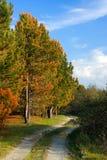 Χρωματισμένα φθινόπωρο δέντρα στην άνοιξη στοκ εικόνα