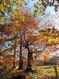 χρωματισμένα φθινόπωρο δέντ& στοκ φωτογραφία