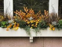 Χρωματισμένα φθινόπωρο λουλούδια στο ξύλινο κιβώτιο λουλουδιών στοκ εικόνες με δικαίωμα ελεύθερης χρήσης