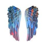 Χρωματισμένα φτερά ασβεστοκονιάματος Στοκ Φωτογραφίες