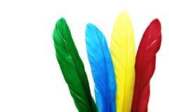 χρωματισμένα φτερά στοκ εικόνα