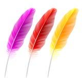 χρωματισμένα φτερά διανυσματική απεικόνιση