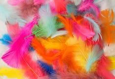 Χρωματισμένα φτερά Στοκ εικόνες με δικαίωμα ελεύθερης χρήσης