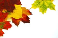 χρωματισμένα φύλλα Στοκ εικόνες με δικαίωμα ελεύθερης χρήσης