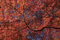 Χρωματισμένα φύλλα Στοκ εικόνα με δικαίωμα ελεύθερης χρήσης